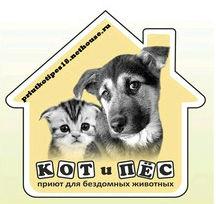 Вк кот и пес ижевск